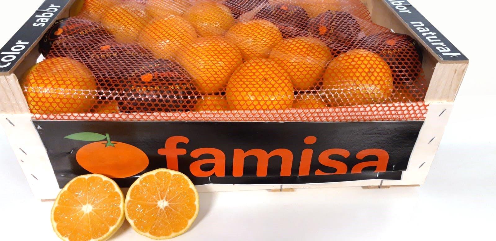 Eerste binnenkomst Spaanse Okitsu mandarijnen!