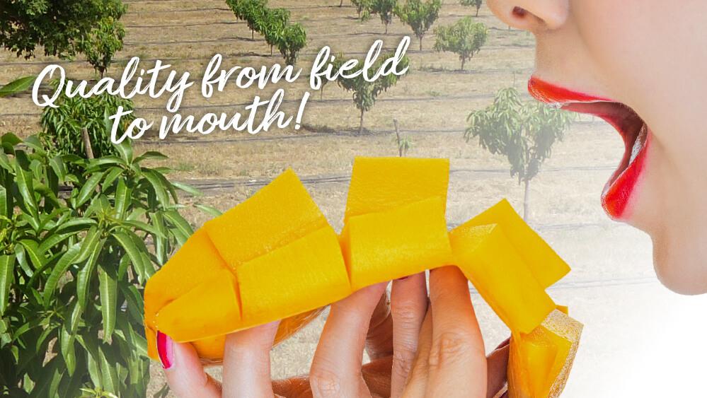 Fresh2You-mango-beeld