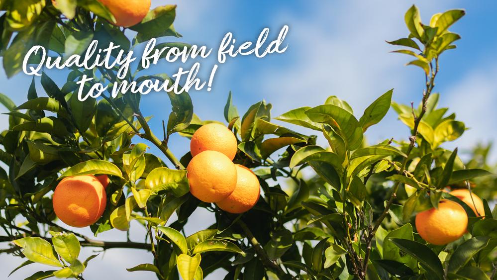 Fresh2You mandarijn okitsu beeld